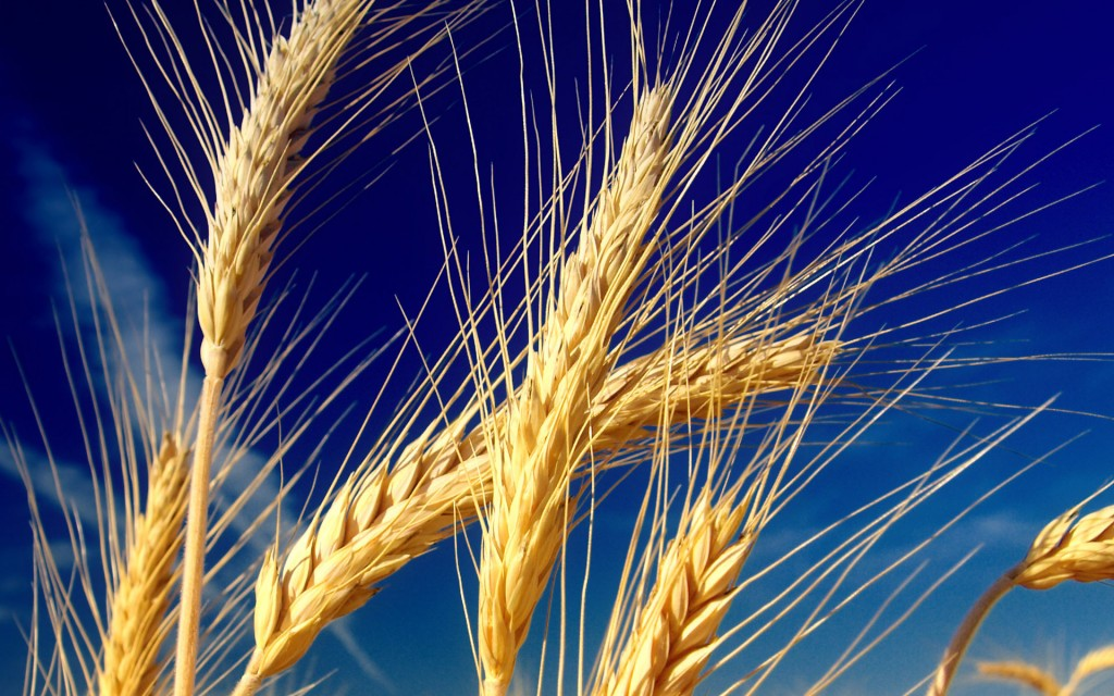 Хід збирання ранніх зернових та зернобобових культур (станом на 25.07.16)