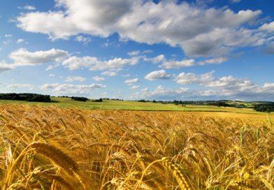 13 листопада відбудеться обласний захід щодо відзначення Дня працівників сільського господарства України