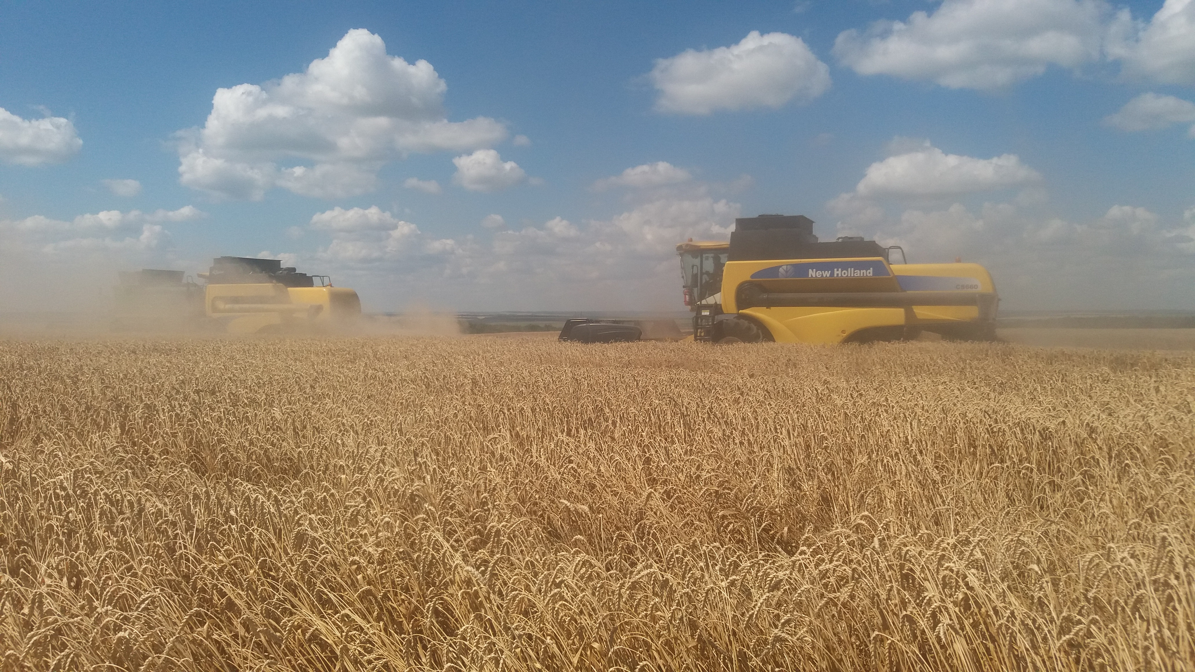 Хід збирання ранніх зернових та зернобобових культур (станом на 01.07.16)