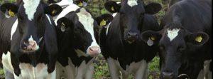 Стан галузей тваринництва  за І півріччя 2016 рок