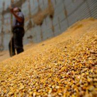Ціни на зерно нового врожаю (станом на 26.08.2016)
