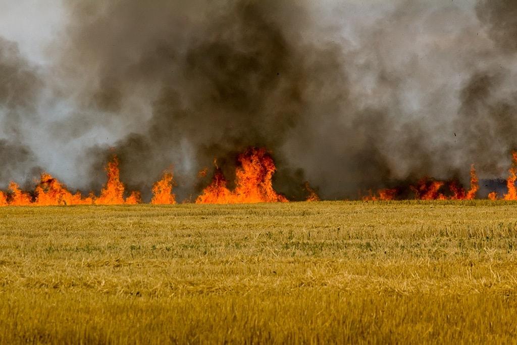 Вогонь знищив 64 гектари хлібних масивів