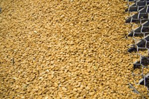 У Костянтинівському районі найкращий врожай за останні три роки