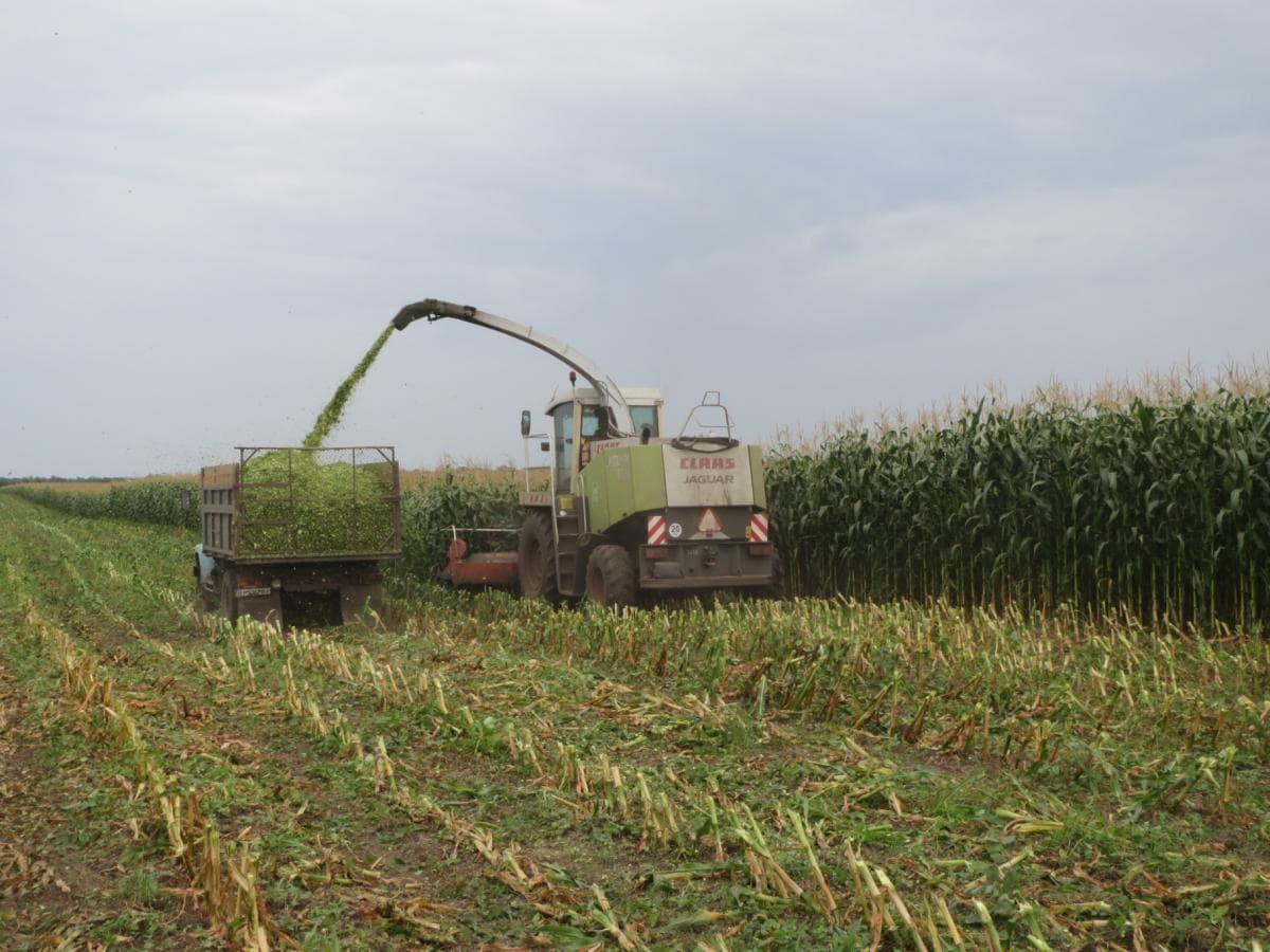 Стан галузі рослинництва у донецькій області (на 05.09.2016)
