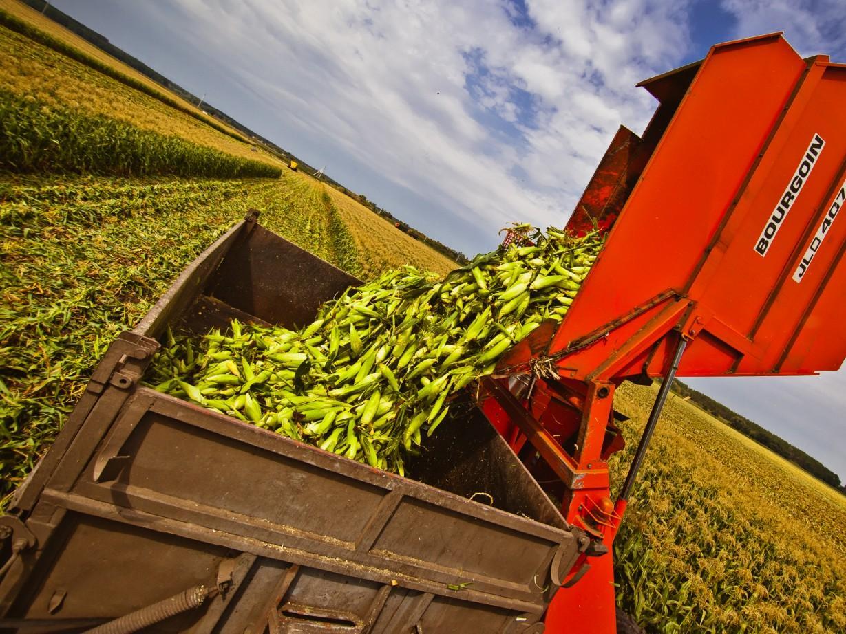 Ціни на зерно нового урожаю (станом на 09.09.2016)