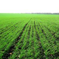 Стан галузі рослинництва (на 07.11.2016)