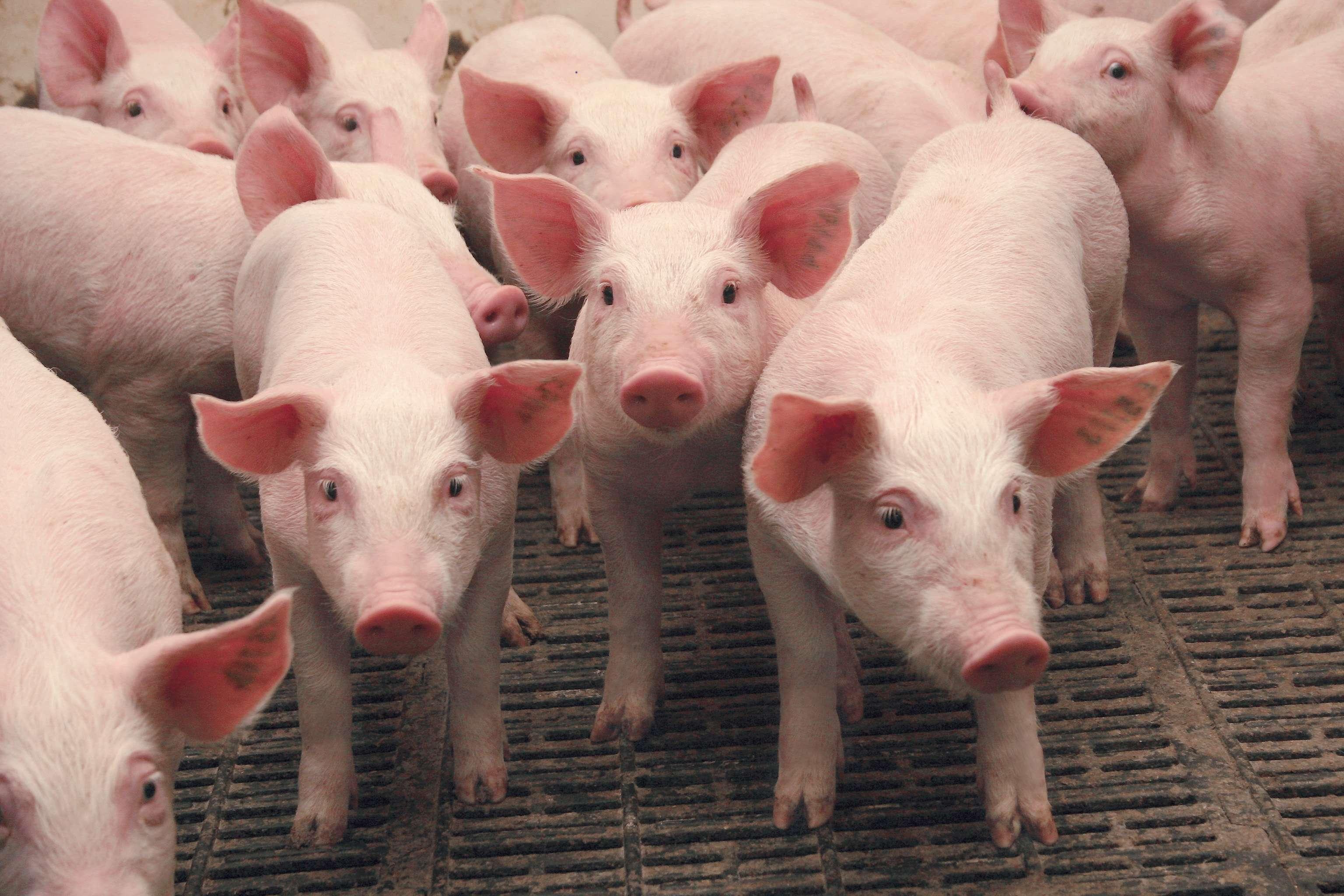 Стан галузі тваринництва (на 01.11.2016)