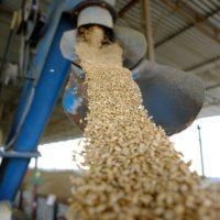Ціни на зерно нового урожаю (станом на 16.12.2016)