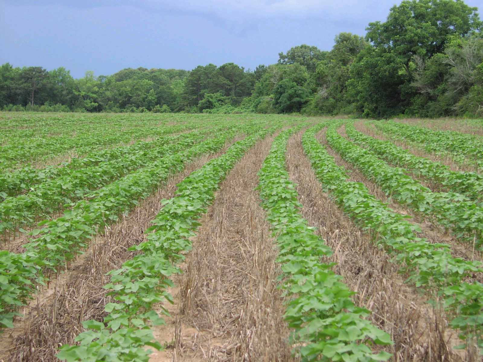 Принципи сівозміни: краща десятка Доктора сільськогосподарських наук Університету Південної Дакоти