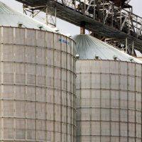 Ціни на зерно, соняшник, кукурудзу (на 20.01.2017)