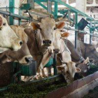 Середньодобовий надій молока Донецької області (станом на 03.02.2017)