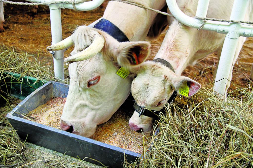 Розвиток агропромислового комплексу Донецької області