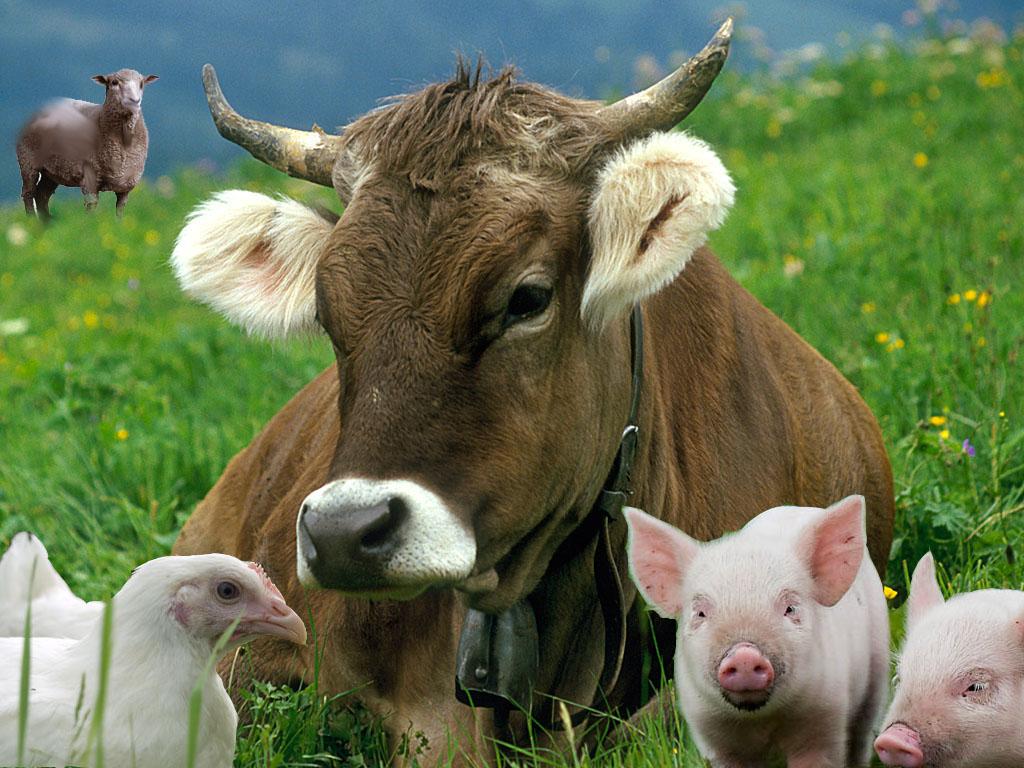 Рейтинг показників виробництва продукції тваринництва, чисельності поголів'я худоби та птиці, їх продуктивності по с.-г. підприємствах на 01.04.2017