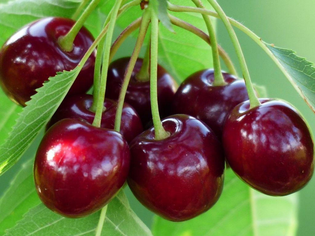 Урядовий комітет затвердив порядок розподілу коштів на виноградарство та садівництво