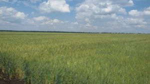 Відбувся «Перший східноукраїнський День поля» на базі підприємств кампанії «HarvEast Holding»