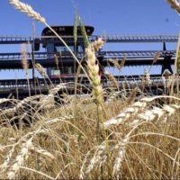 Хід проведення збирання врожаю ранніх зернових та зернобобових культур (станом на 17.07.2017)