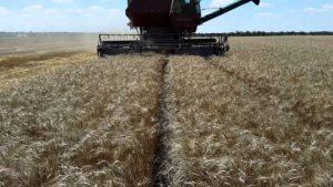 Хлібороби Мангушського району завершили збирання врожаю ранніх зернових та зернобобових культур