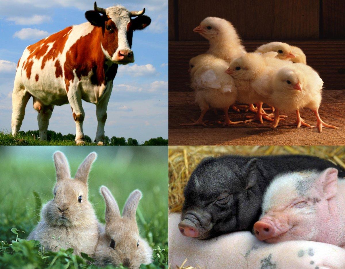 Державна підтримка галузі тваринництва у 2017 - 2018 роках