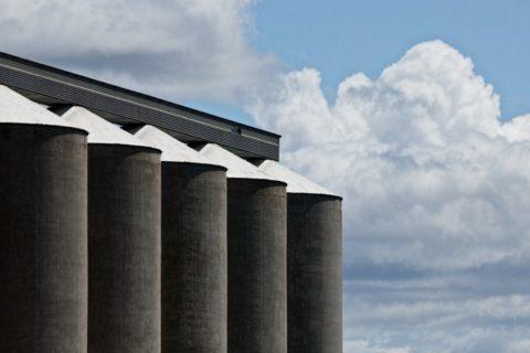 Ціни на зерно, соняшник, кукурудзу (на 24.11.2017)