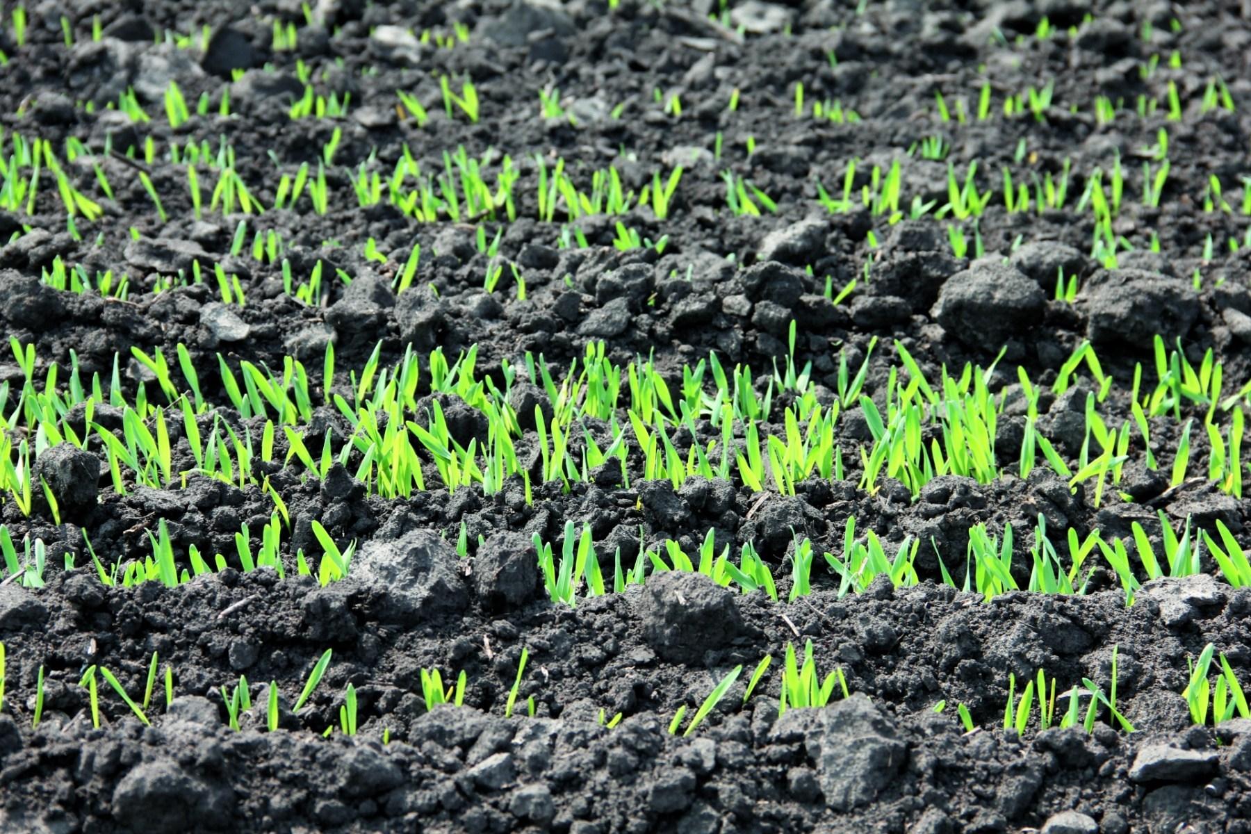 Фітосанітарний стан сільськогосподарських культур станом на 22.11.2017 року