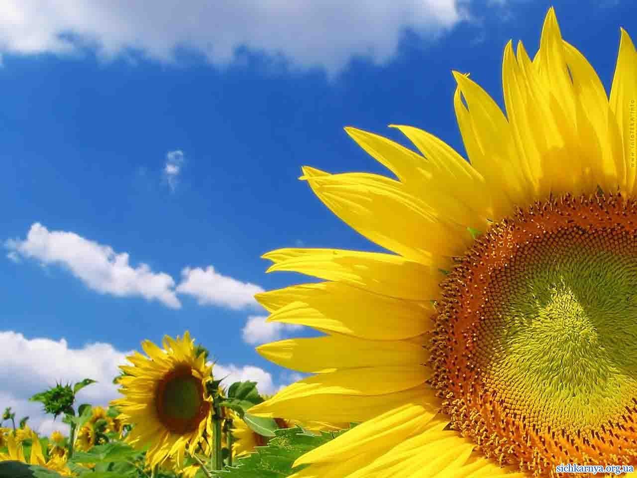 Чим може український агробізнес зацікавити іноземних інвесторів