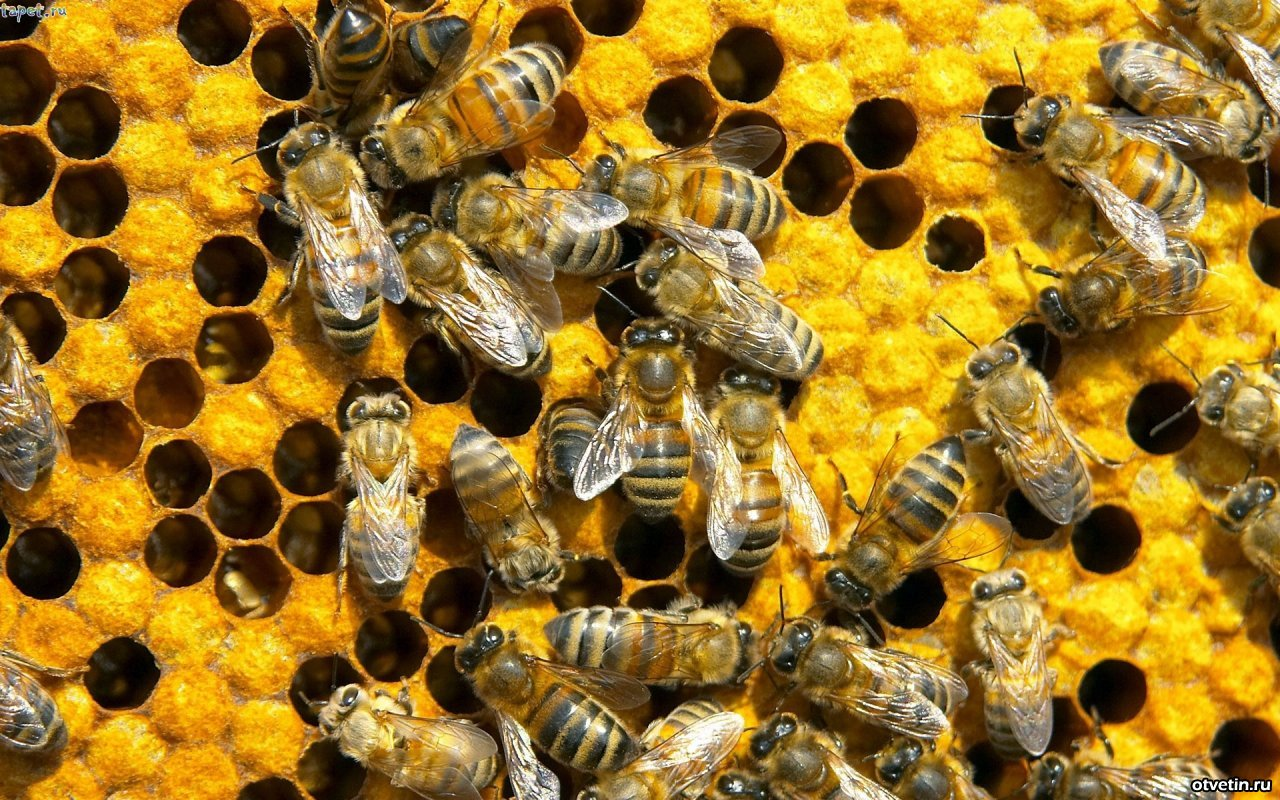 Розвиток галузі бджільництва в Україні