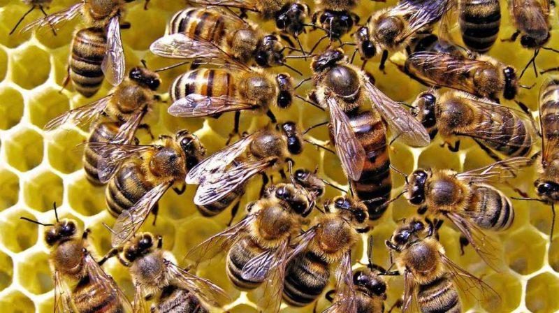 Попередження про недопущення негативного впливу на галузь бджільництва