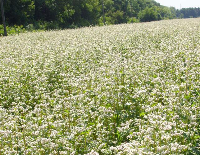 Вплив агрометеорологічних умов на вегетацію с.-г. культур в Донецькому регіоні (на 20.07.2018)