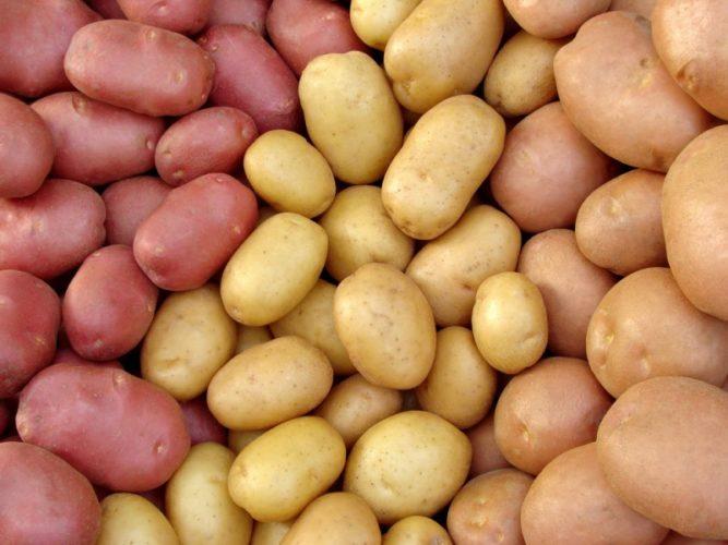 19 лютого форум з професійного картоплярства
