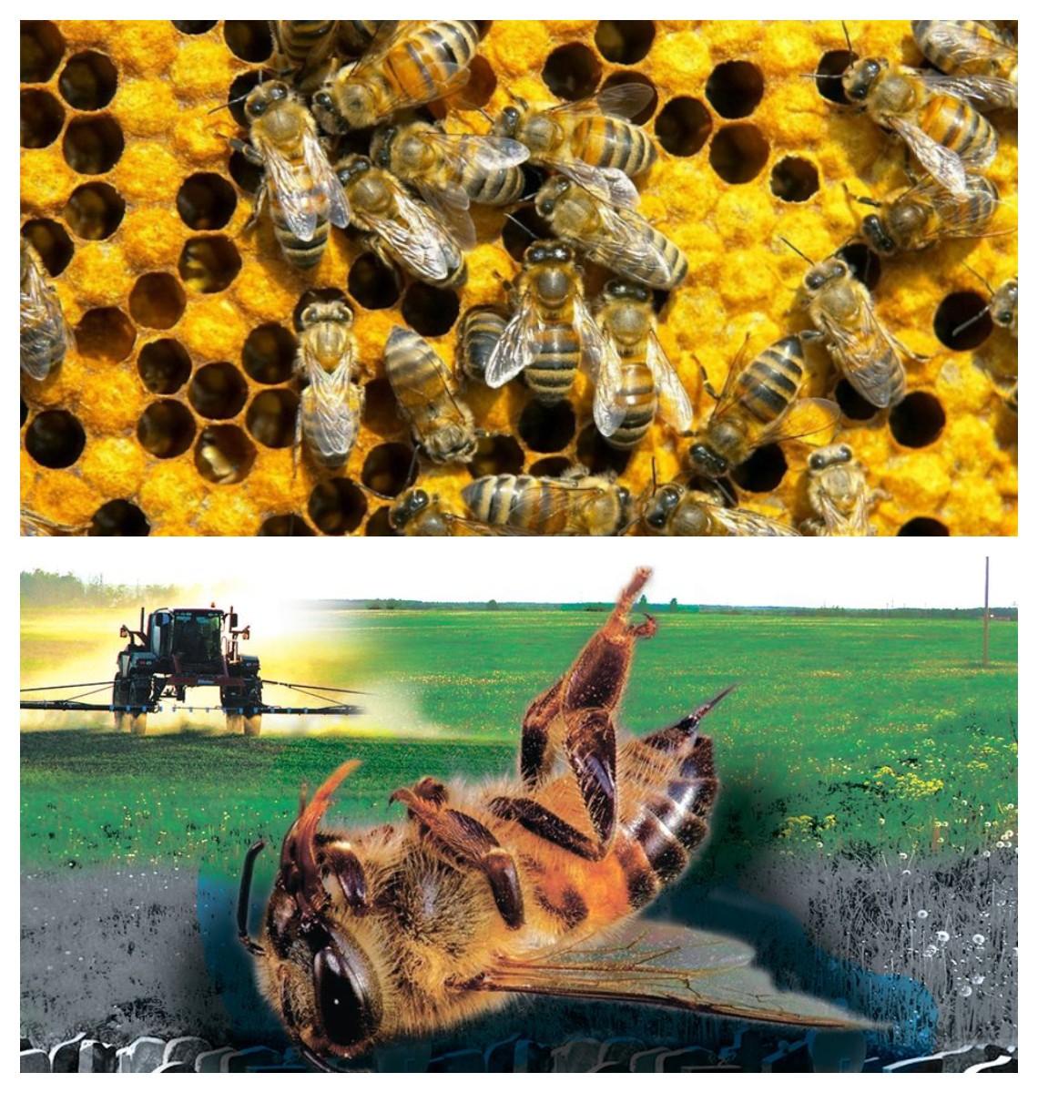 Захист бджіл від застосування пестицидів
