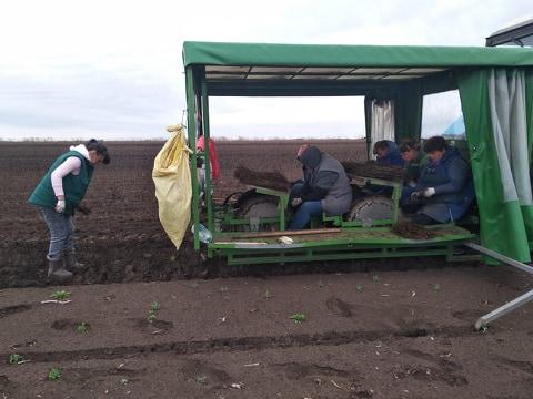 Бахмутський район повідомив про хід проведення весняно-польових робіт в сільгосппідприємствах станом на 11.04.2019 року