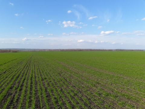 Стан галузі рослинництва в Донецькій області (на 19.04.2019)