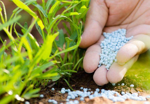 СТОП нелегальним засобам захисту рослин