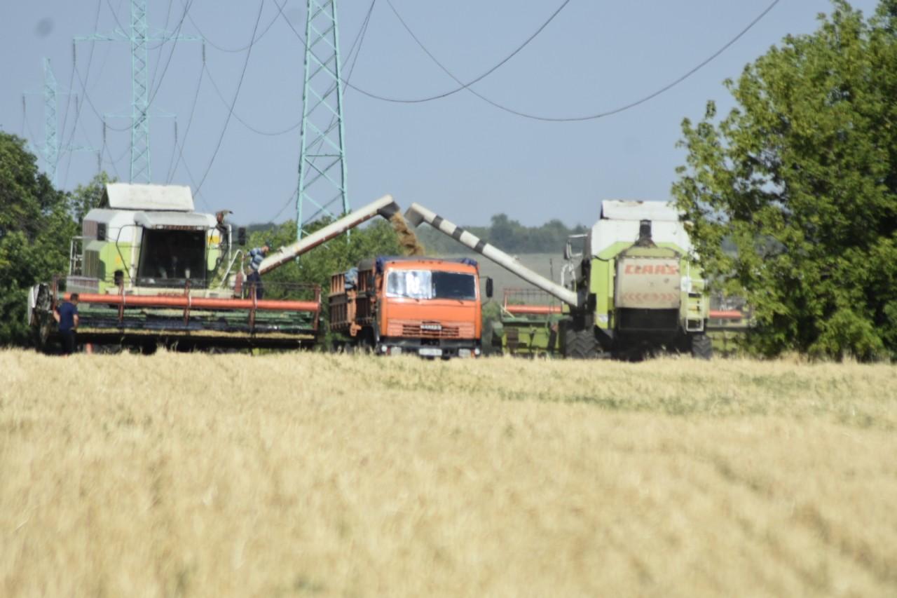 В Мар'їнському районі ранніх зернових та зернобобових культур вже зібрано 49,6 % до прогнозу