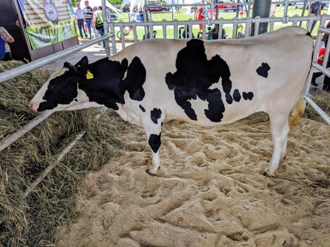 Оголошення про початок роботи комісії для часткового відшкодування вартості установки індивідуального доїння молока