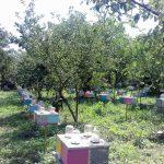 Матковивідна справа у бджільництві (10)