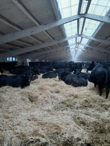 СФГ «Верес» Слов'янського району присвоєно відповідний статус племінної справи у тваринництві