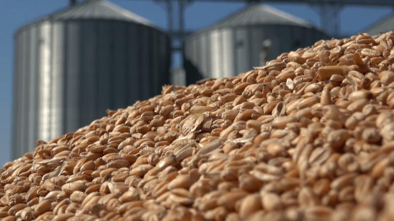 Науково-аналітична записка щодо динаміки виробництва харчових продуктів із зерна у регіонах України – сировинні аспекти