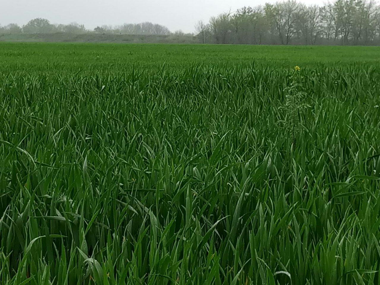 Стан посівів сільськогосподарських культур на території Донецької області