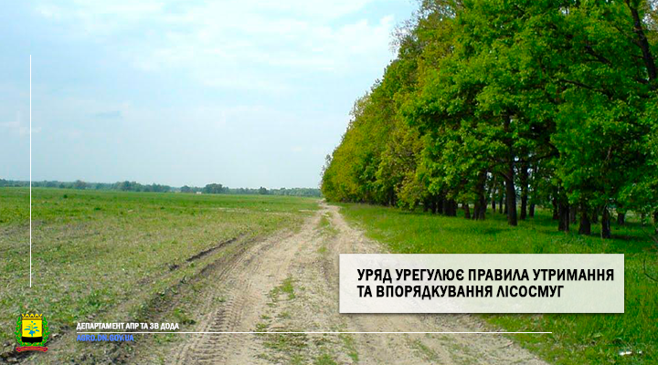 Уряд урегулює правила утримання та впорядкування лісосмуг