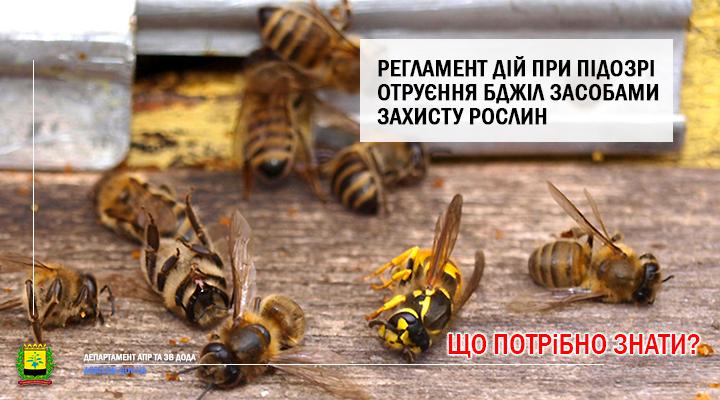 Регламент дій при підозрі отруєння бджіл засобами захисту рослин