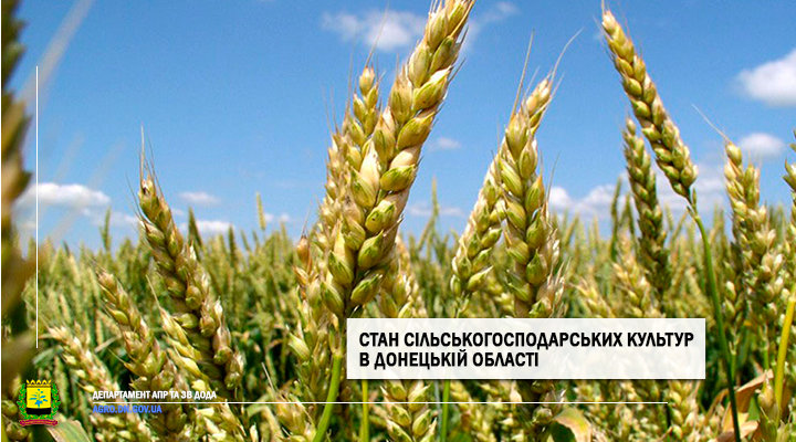 Стан сільськогосподарських культур на 19.06.2020