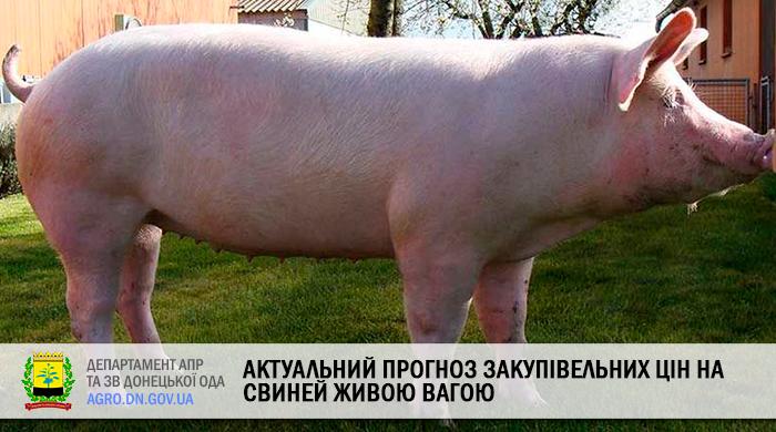 Актуальний прогноз закупівельних цін на свиней живою вагою