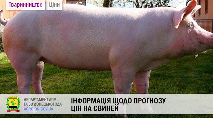 Інформація щодо прогнозу цін на свиней