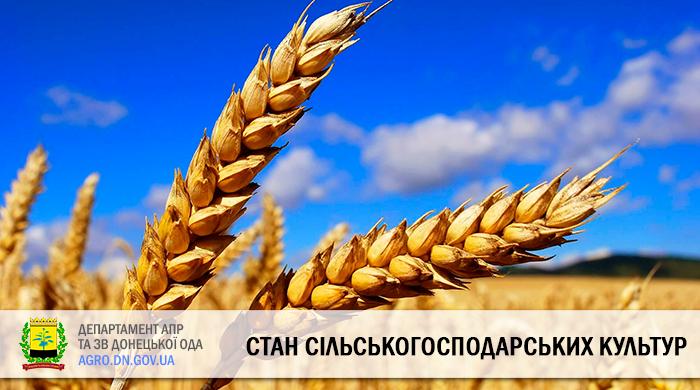 Стан сільськогосподарських культур на 09.07.2020