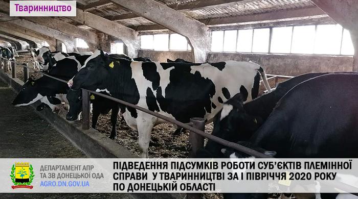 Підведення підсумків роботи суб'єктів племінної справи  у тваринництві за І півріччя 2020 року по Донецькій області