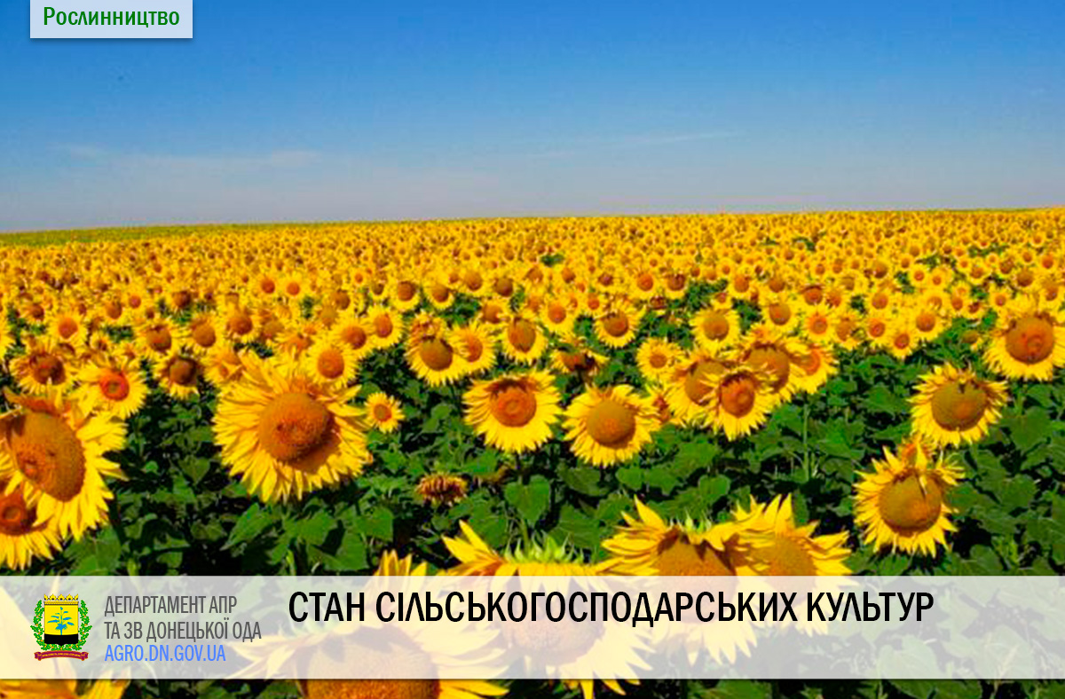Стан сільськогосподарських культур на 20.08.2020