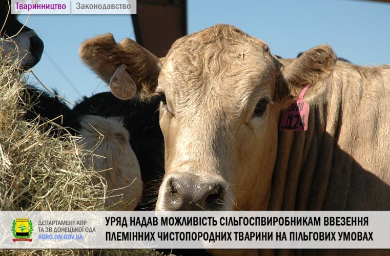 Уряд надав можливість сільгоспвиробникам ввезення племінних чистопородних тварини на пільгових умовах