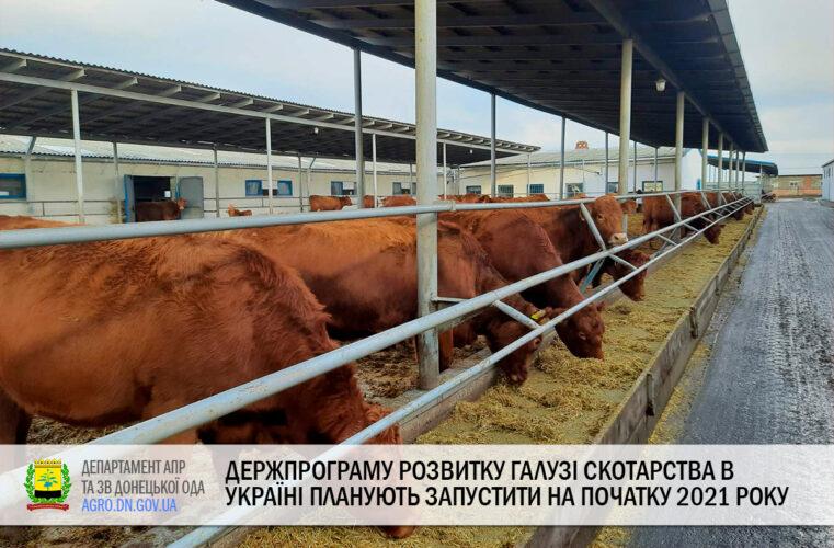 Держпрограму розвитку галузі скотарства в Україні планують запустити на початку 2021 року