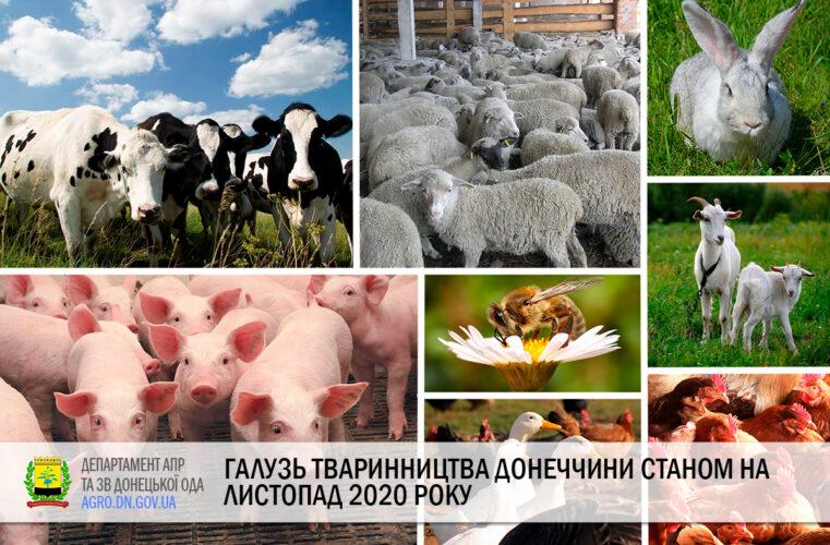 Галузь тваринництва Донеччини станом на листопад 2020 року